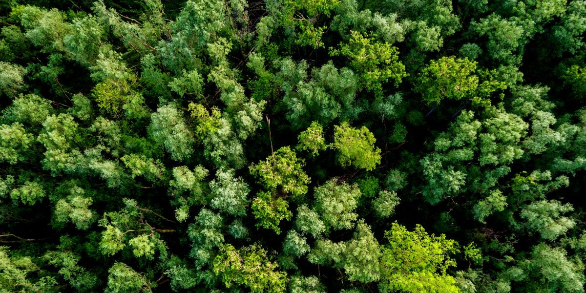 "Former EPA & USDA Experts: Wood Bioenergy Is A ""Climate Change Solution"""
